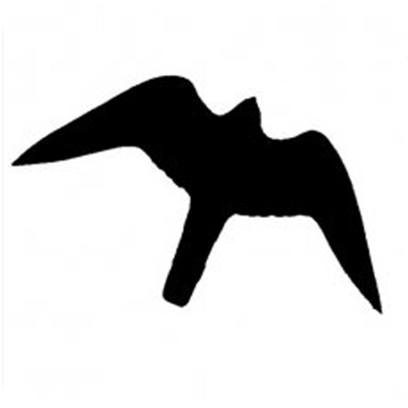 Was_tun_wenn_ein_Vogel_gegen_die_Fensterscheibe_fliegt_-_Foto_03_Sentinelle-noire