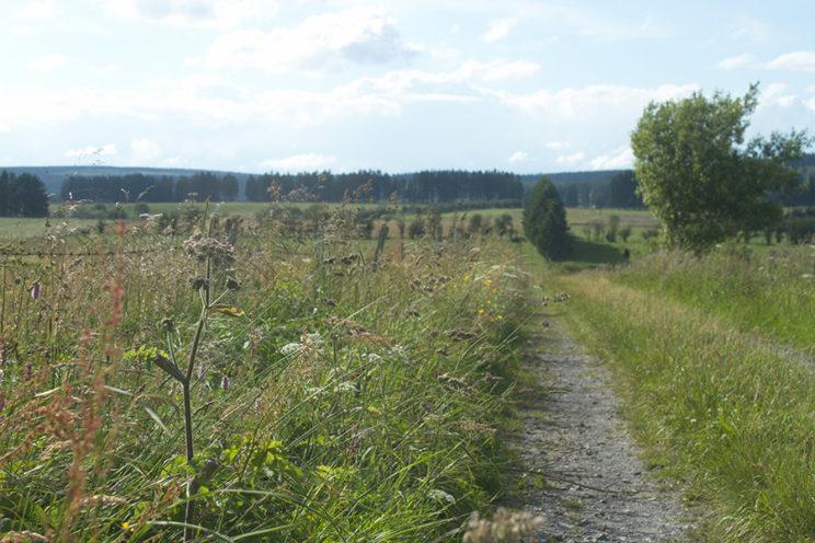 - Wiesenlandschaft in der Nähe des Rurtals -