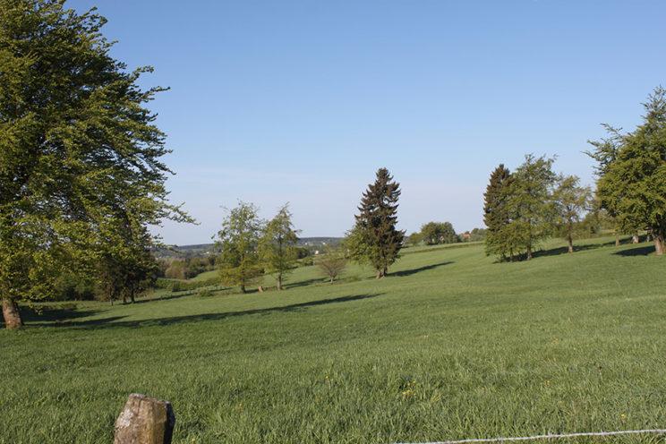- Wiesenlandschaft bei Hünningen/Büllingen -